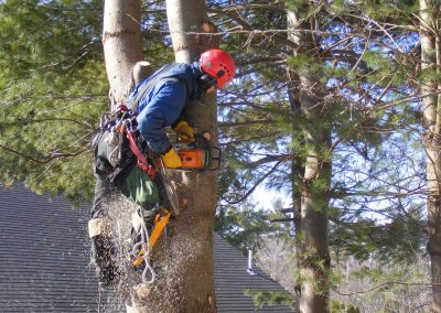 dangerous-tree-removal